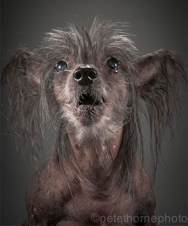 old-dog-portrait-photography-old-faithful-pete-thorne-5