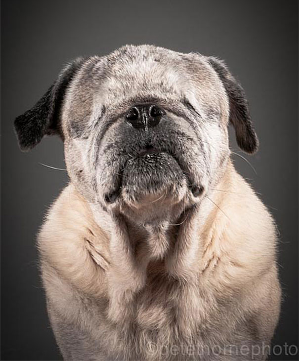 Warm And Intimate Photos Of Really Old Dogs