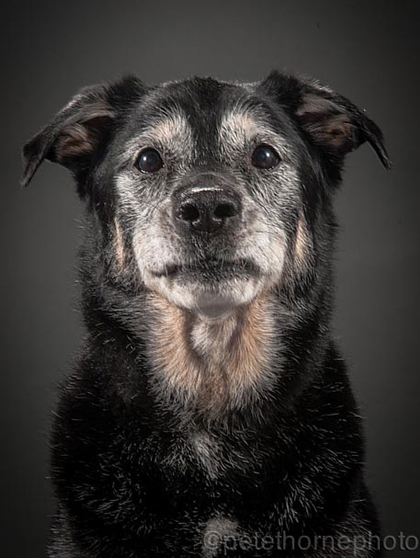 old-dog-portrait-photography-old-faithful-pete-thorne-9