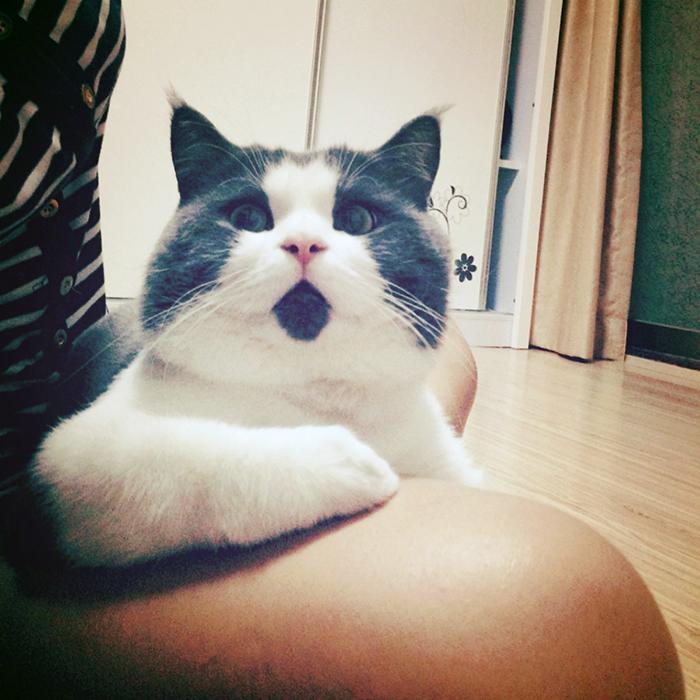 omg-cat-funny-3