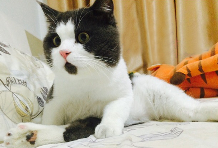 omg-cat-funny-6