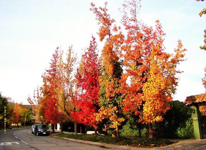 Autumn In The Neighborhood , Chile