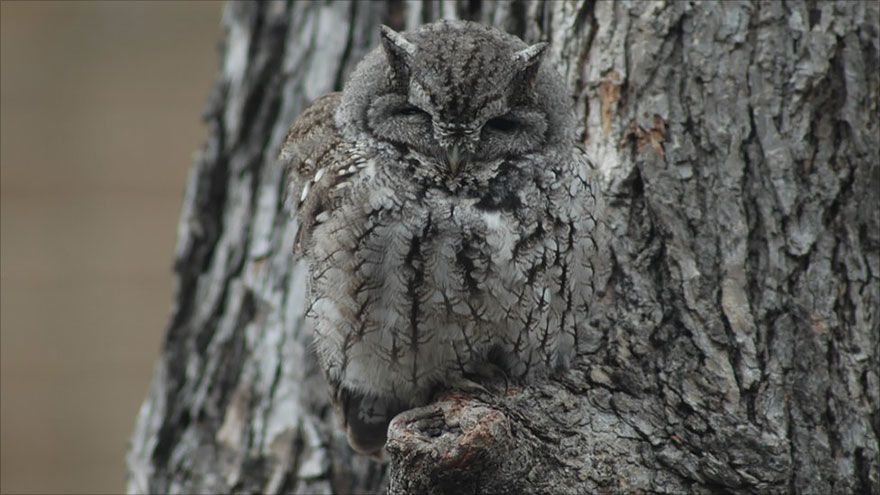 owl-camouflage-disguise-7