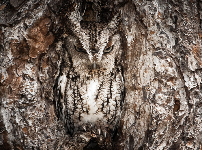 15 Stunning Examples Of Owl Camouflage