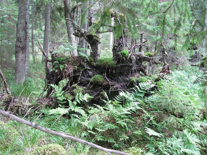 Metsik Loodus Lahemaal