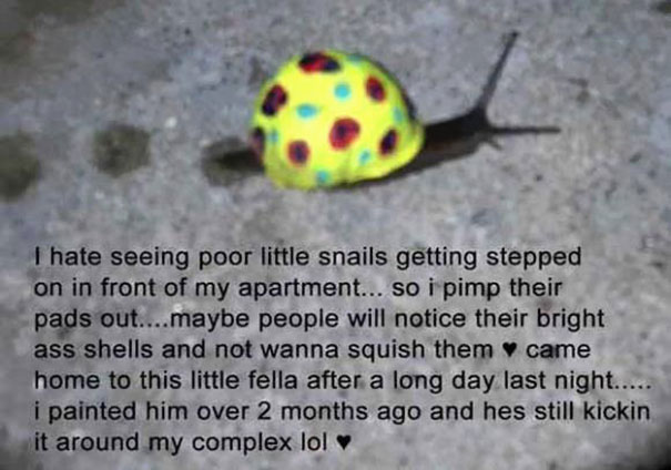 To Prevent Snails From Getting Stepped On People Pimp Out
