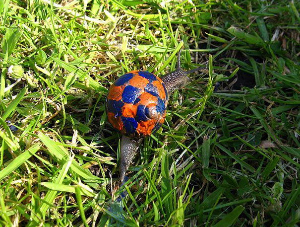 painted-snail-shell-13