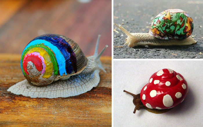 To Prevent Snails From Getting Stepped On, People Pimp Out Their Shells