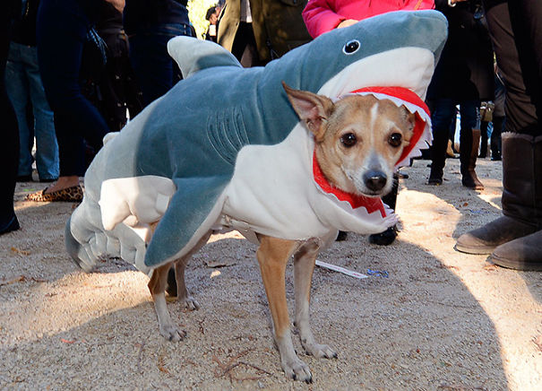 Doggy Eaten By A Shark