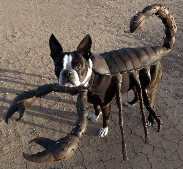 Scorpion Doggy