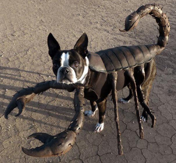 Scorpion Doggy