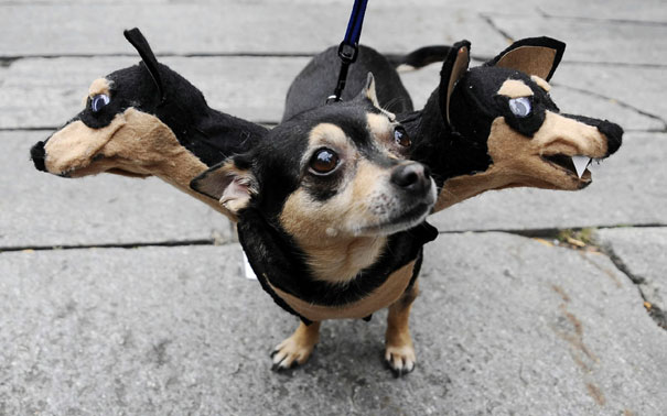 Cerberus Guardian Dog
