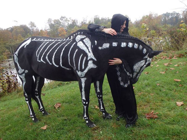 #2 Skeleton Horse & 25+ Terrifyingly Cute Halloween Costumes For Pets | Bored Panda