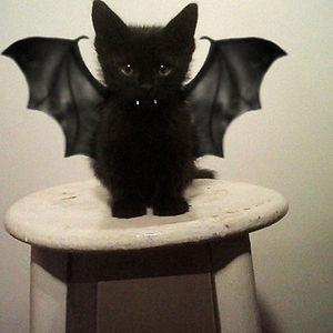 pet-halloween-costume-291__300.jpg