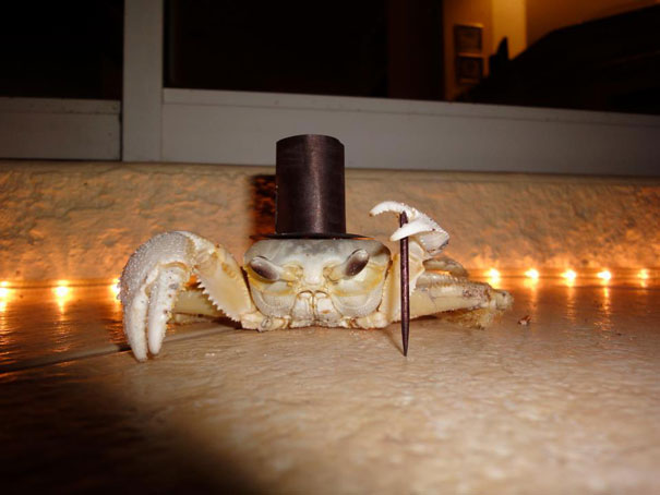 #7 Classy Crab & 25+ Terrifyingly Cute Halloween Costumes For Pets | Bored Panda