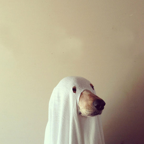 Ghost, Definetely Not A Dog