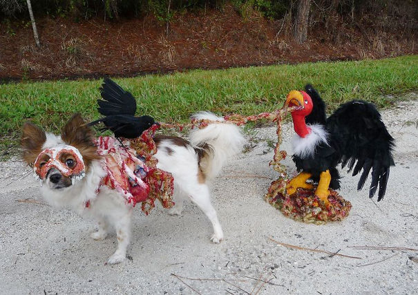 Zombie Dog Being Eaten By A Vulture