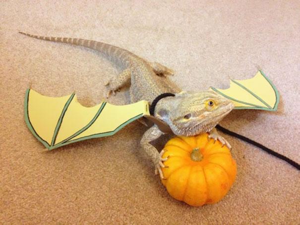 Bearded Dragon Dressed As A Dragon