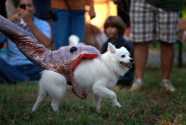 Dog Being Eaten By A Snake