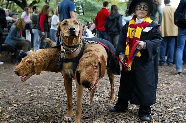Fluffy, The Three-Headed Dog