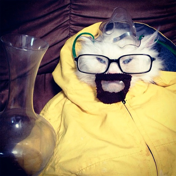 Breaking Bad Cat