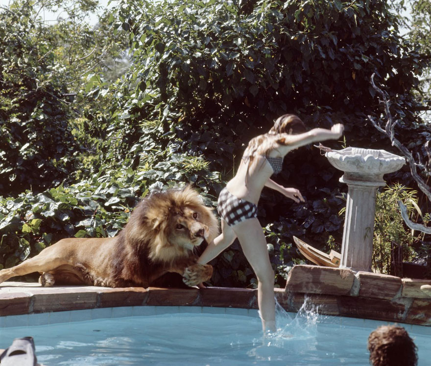 pet-lion-neil-film-michael-rougier-4