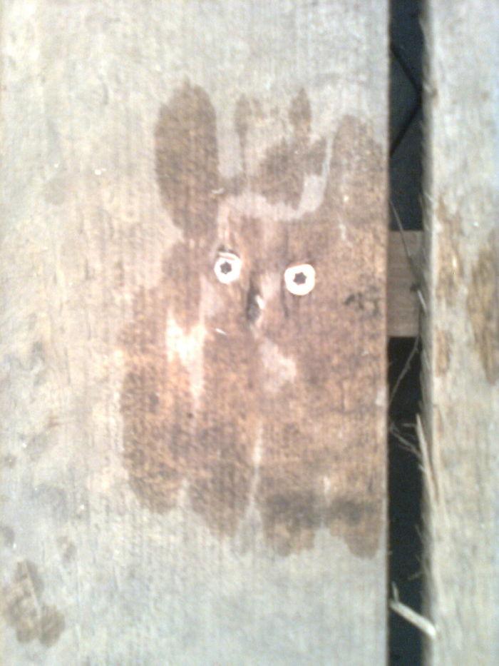 Rain/wood Art – What Do You See?