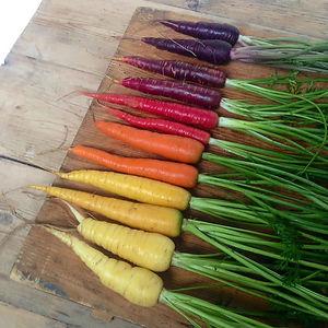 Carrot Spectrum