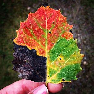 All Seasons In One Leaf