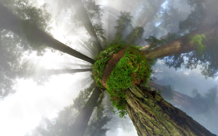 California Redwoods 360° Panorama – Little Planet Projection