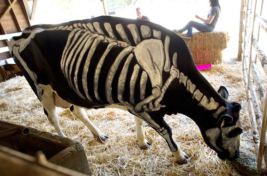 skeleton-dog-halloween-costume-non-toxic-pet-paint-3