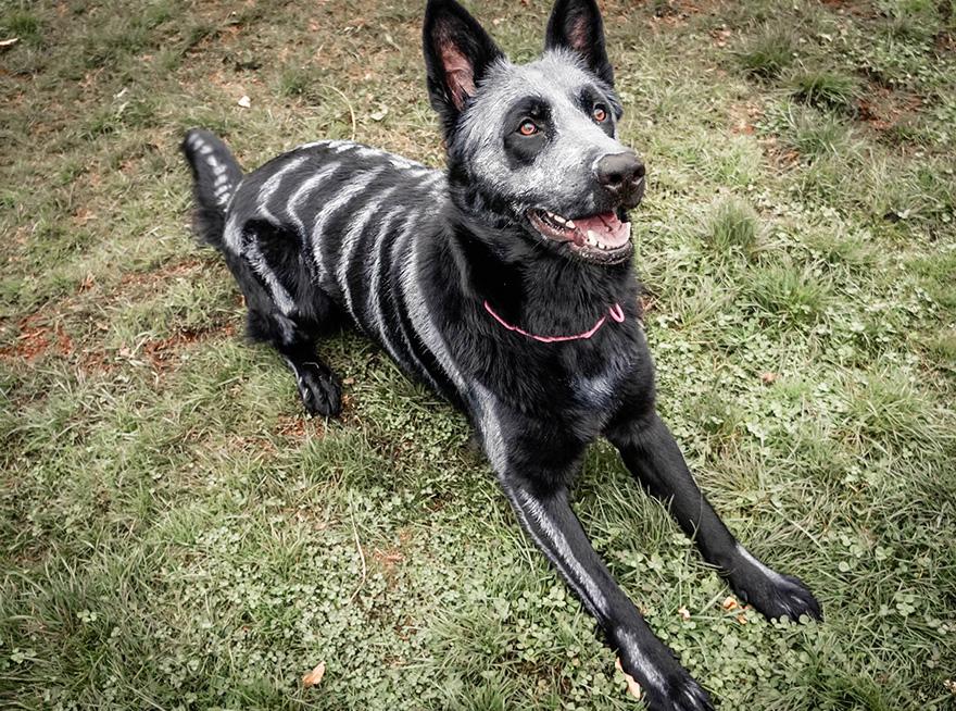 skeleton-dog-halloween-costume-non-toxic-pet-paint-8