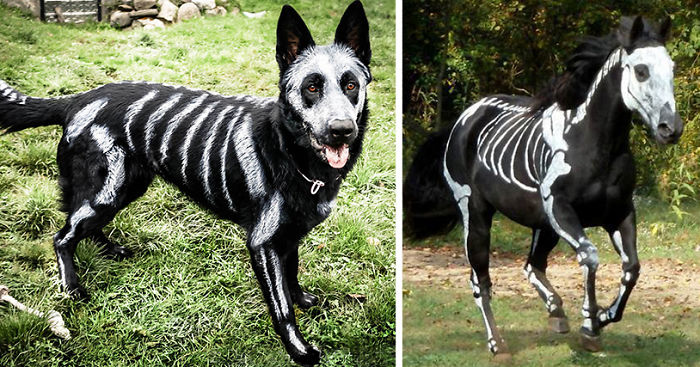 Pet Owners Use Non Toxic Face Paint To Turn Their Animals Into