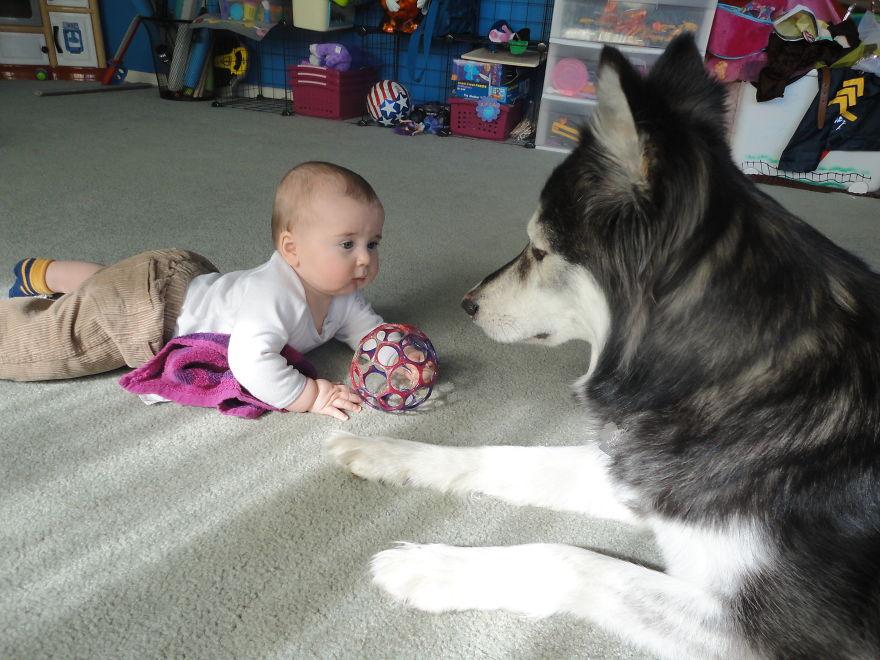 Little Babies, Huge Dogs