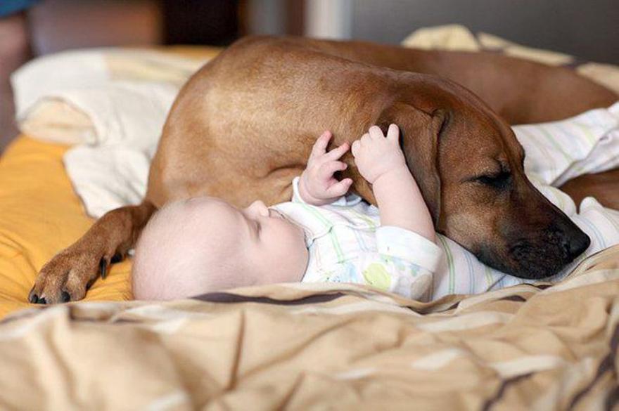 Small Kids, Big Dogs