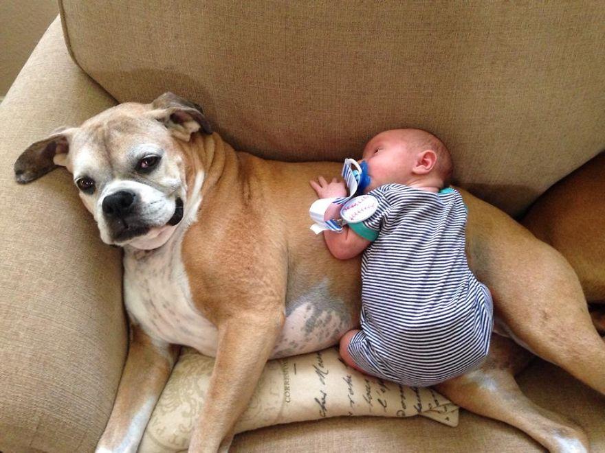 Little Baby And Big Dog