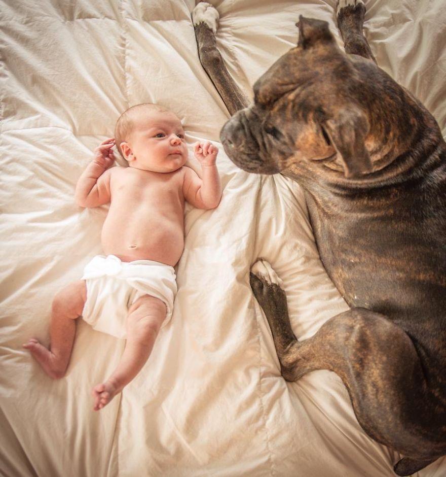 Little Baby, Big Dog