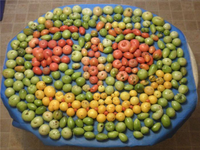 Smiley Tomatoes