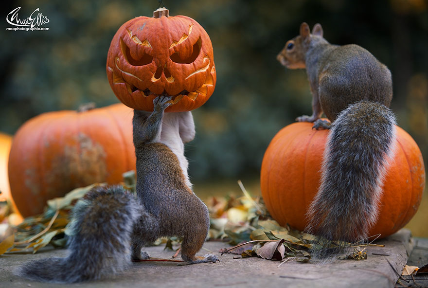 Image result for squirrel and pumpkin