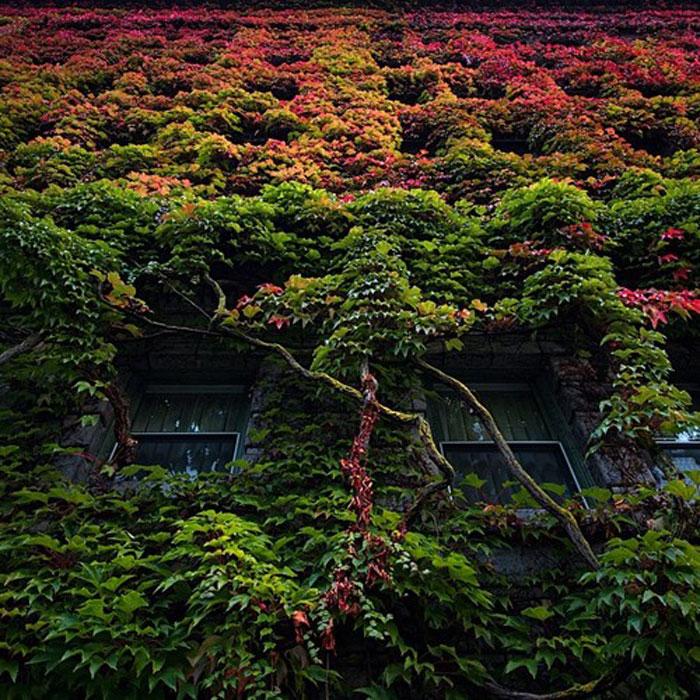 Sylvia Hotel, Vancouver, Canada