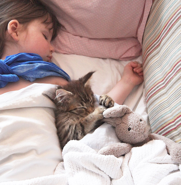Heartwarming Friendship Of A 5-Year-Old Girl With Autism And Her Therapy Cat