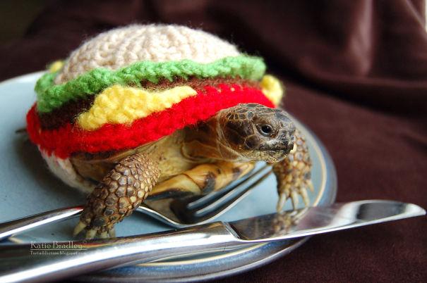 Cheeseburger Tortoise