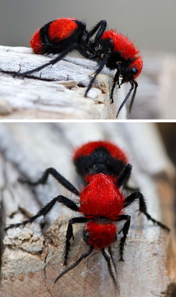 20+ Animals With Unexpected Colors | Bored Panda
