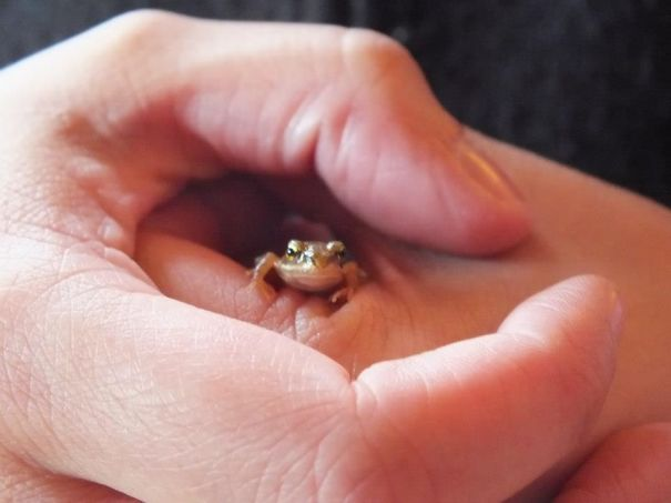 Tiniest Froggie Friend Met In Samogitia, Lithuania