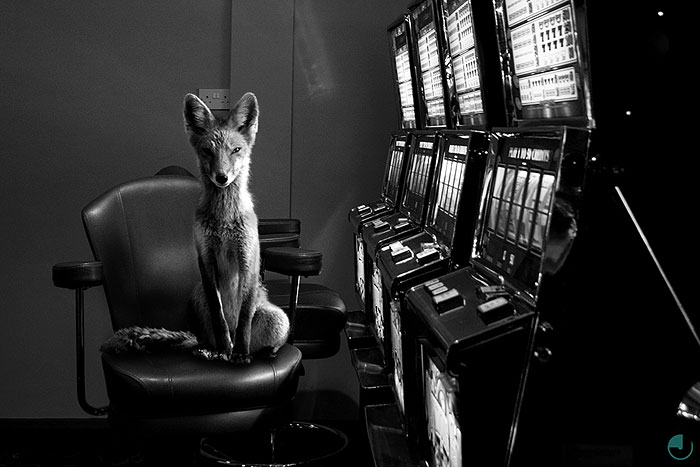 Striking Photographs Of Wild Animals In Urban Locations