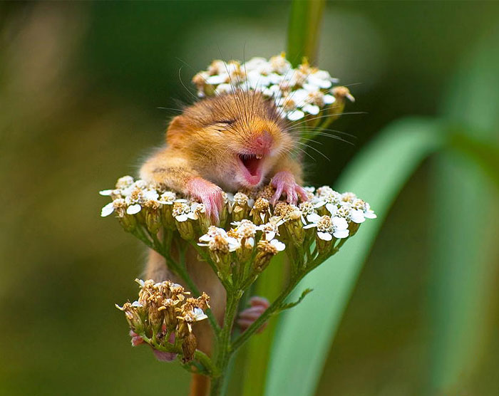 28 Teeny Tiny Wild Mice