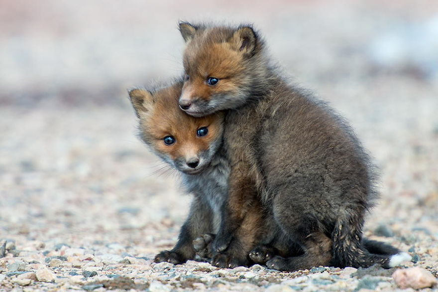 Russian Miner Spends His Breaks Taking Photos Of Foxes In ...