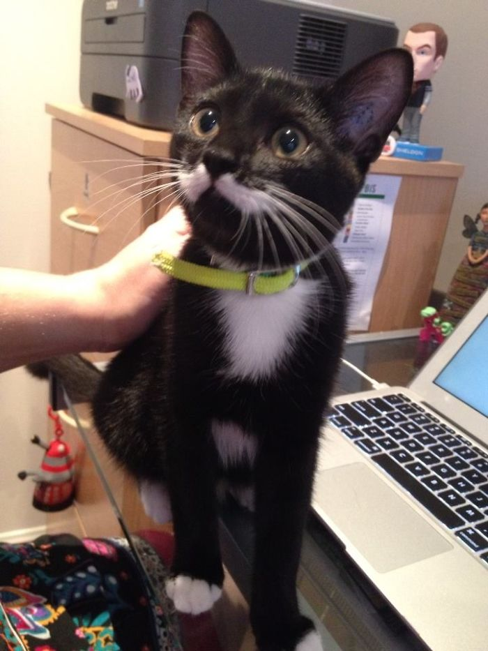 Pickles - With Her Moustache!