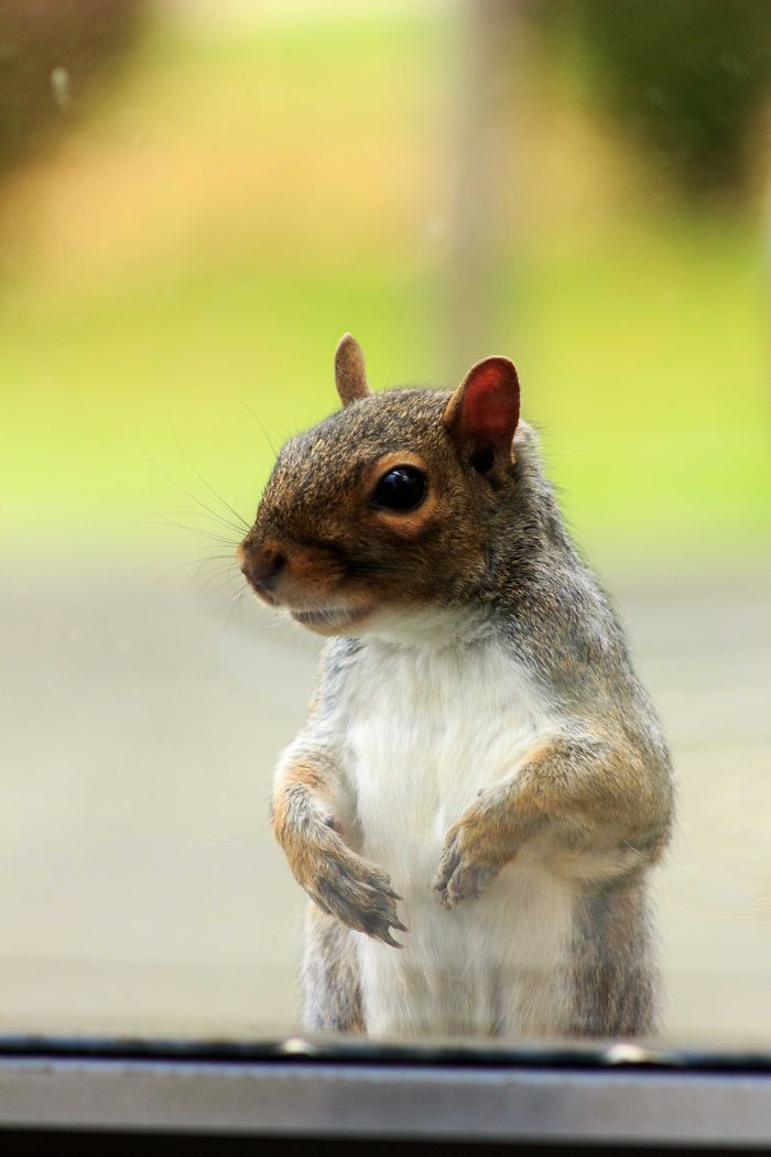Hey Buddy, You're Out Of Peanuts