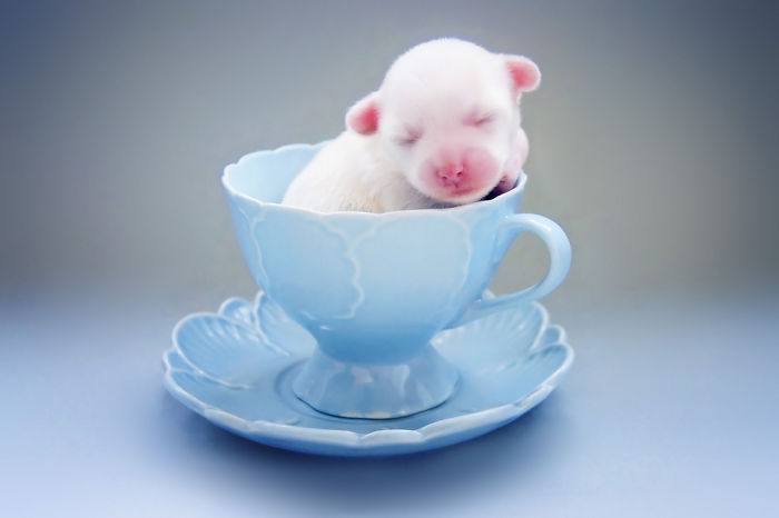 ===Dentro de una taza=== Cuteness-Explosion-Animals-In-Cups11__700
